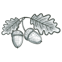 Acorn and oak leaf